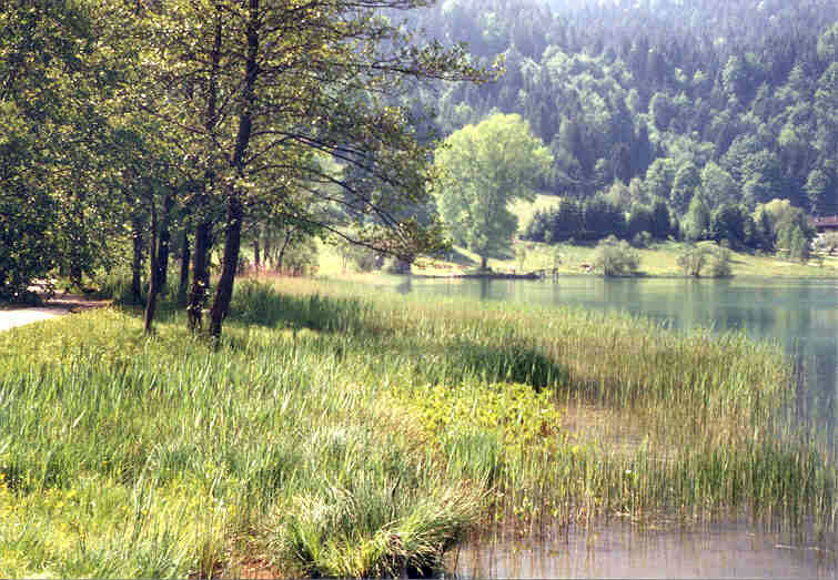 Grünes Seeufer